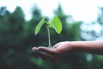 A small plant on a hand